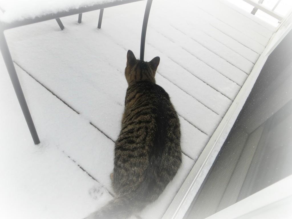 snowcat2